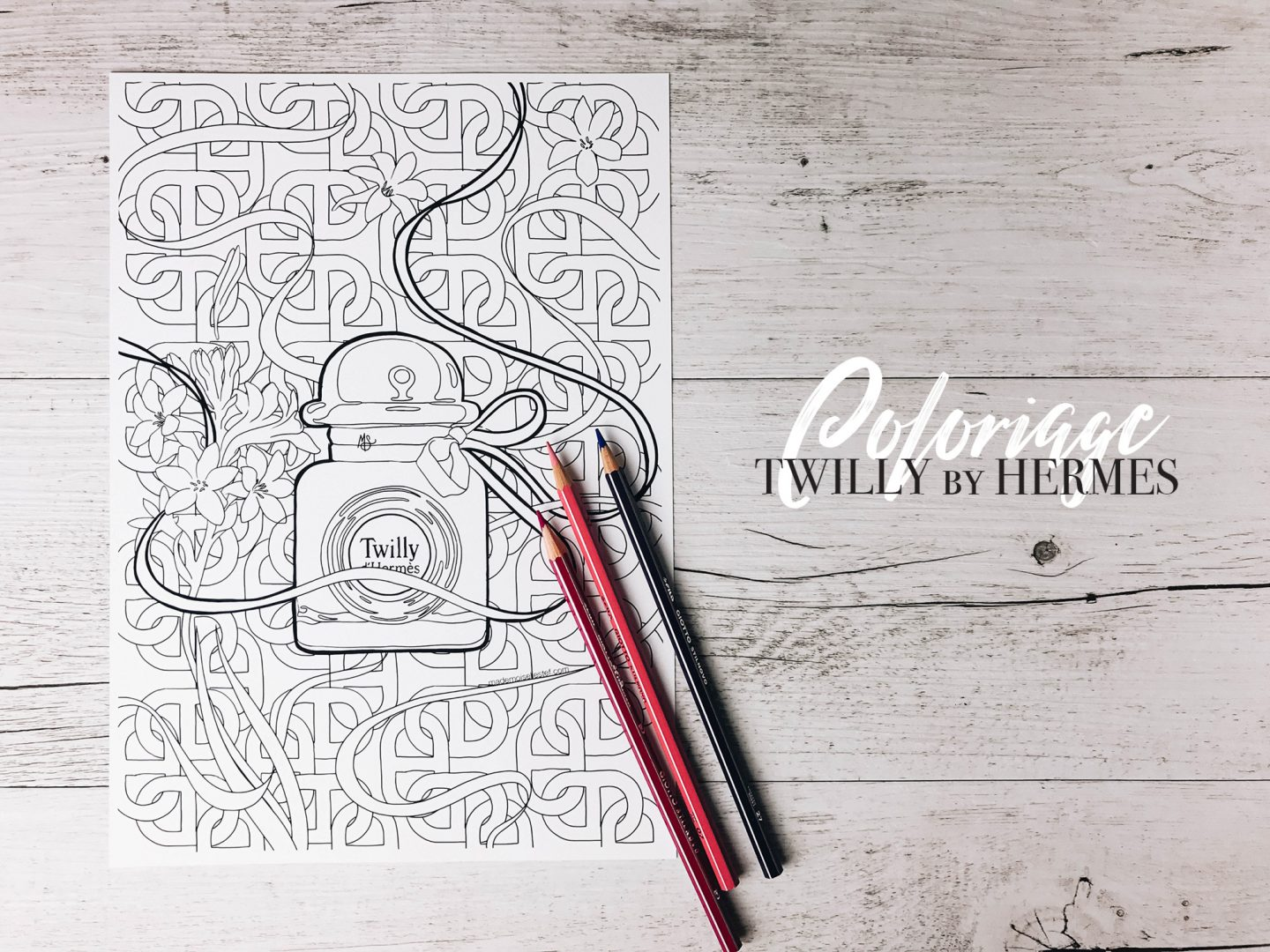 coloriage twilly hermes